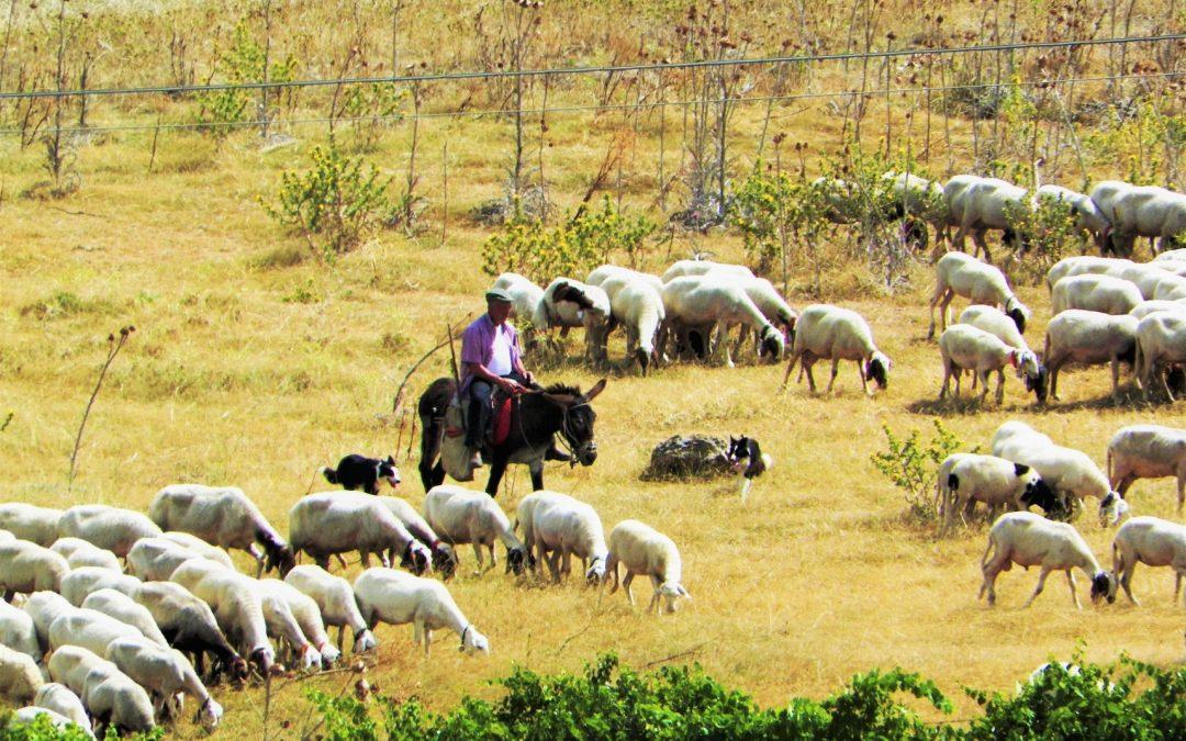 Cosa vuol dire essere pastori oggi nel centro sicilia l antenna