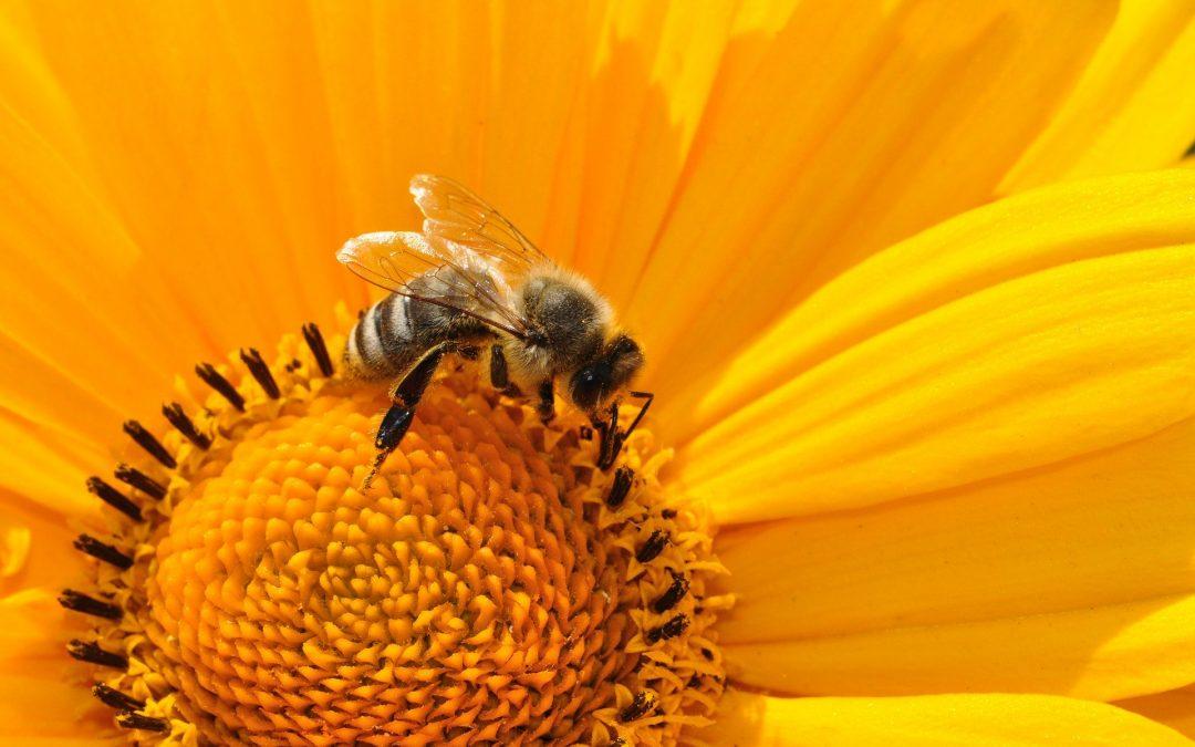 Pianta un fiore in balcone per salvare l'ecosistema: la Challenge lanciata da #BeeYourHero