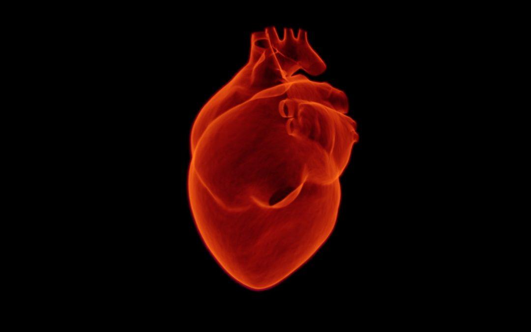 Anche il cuore ha un cervello