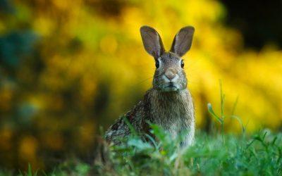 Il Tar sospende la caccia in Sicilia: vittoria degli ambientalisti