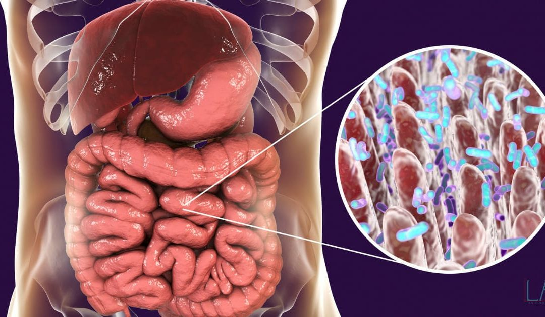 Chiedilo all'intestino, chiedilo al Microbiota!