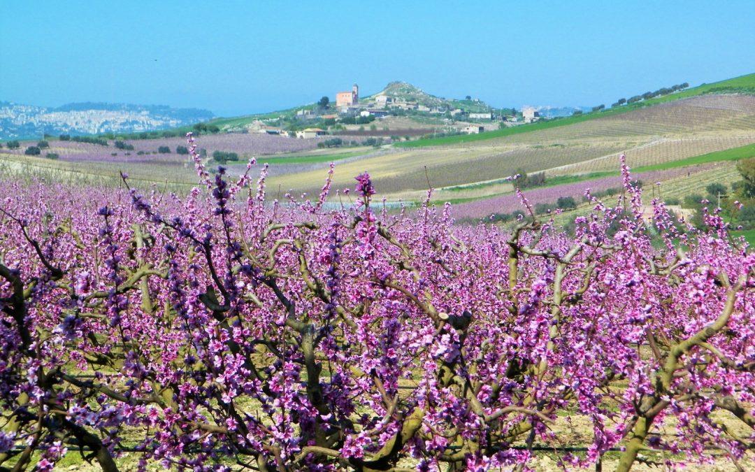 La Pesca di Delia IGP: un risultato prestigioso per il comune di Delia e la Sicilia