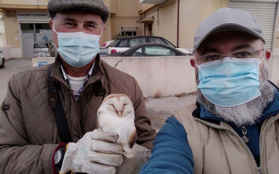 Salvato Barbagianni dal personale ferroviario e guardie zoofile WWF di Caltanissetta
